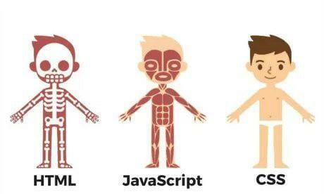 Differences between html, javascript and CSS